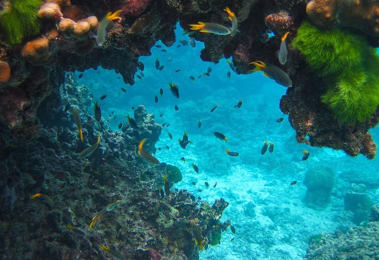 Diving off Phuket