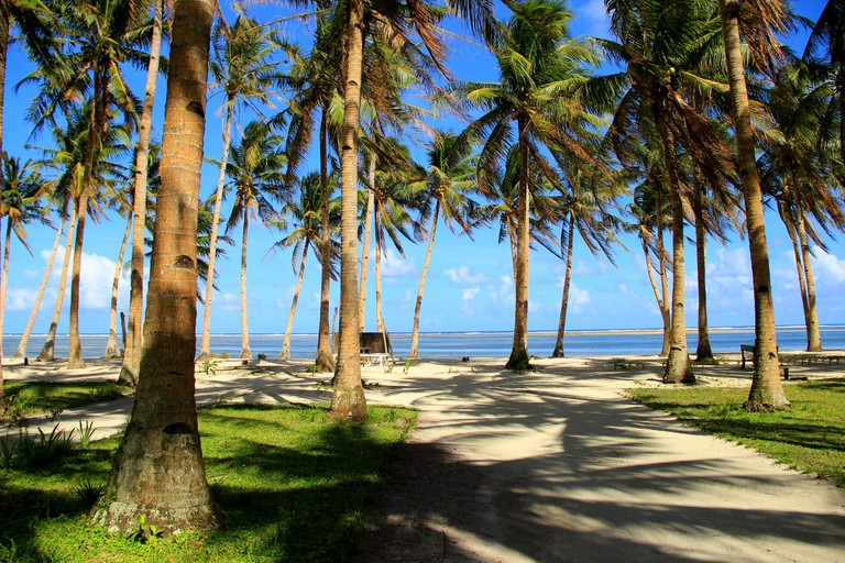 Coconut trees swaying in the wind