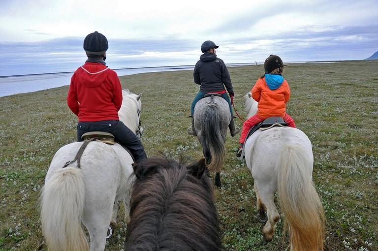 taking a sealwatching tour by Icelandic horseback at Húsey farm | Jennifer Boyer/Flickr