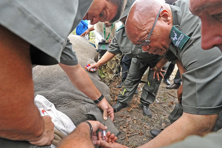 South African president Jacob Zuma participates in a rhino poaching awareness campaign