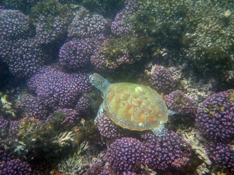 Sleeping Turtle on Seabed By: Mc_dudley