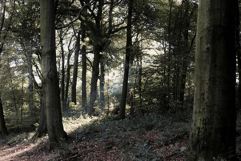 Grafenberger Wald | © RoettgersB/Flickr