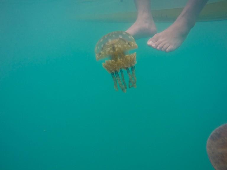 Underwater shot of jellyfish