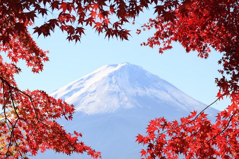 Mt. Fuji framed in autumn foliage