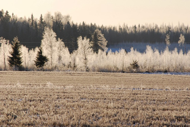 Frost covered trees and field / Dave_S / Flickr
