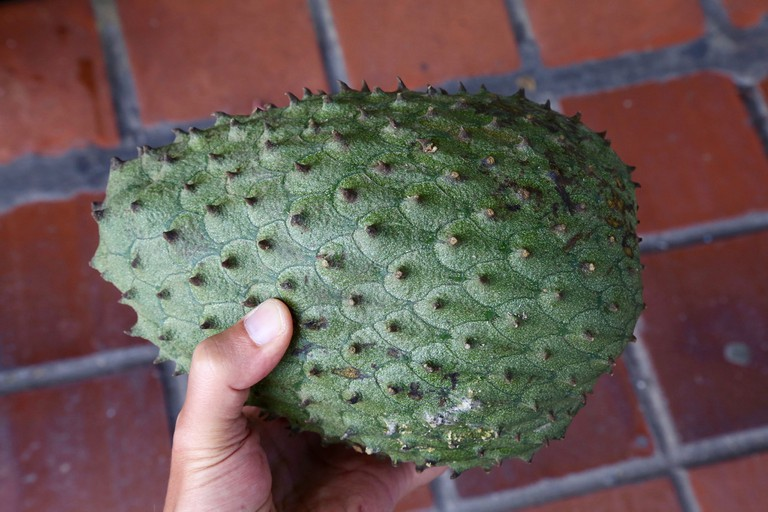 Annona muricata (Annonaceae) – Guanábana