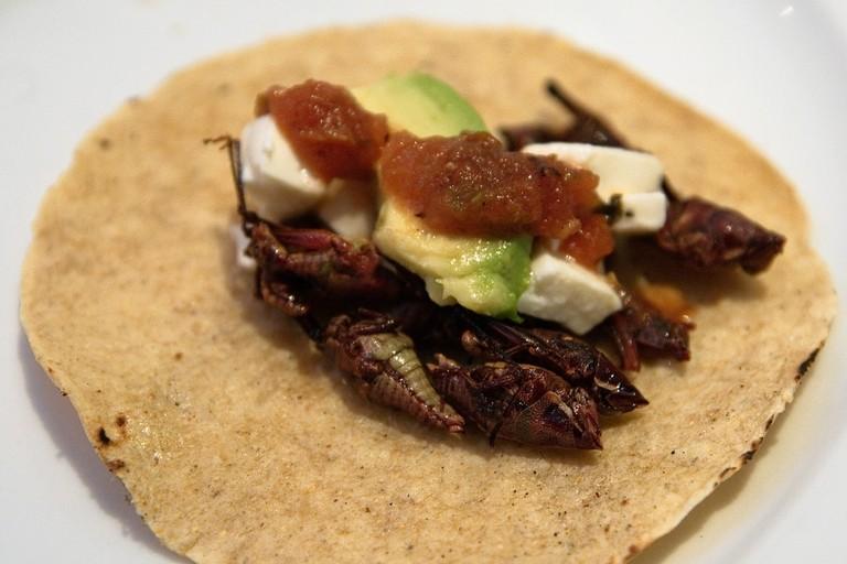 Taco de chapulines (grasshoppers)