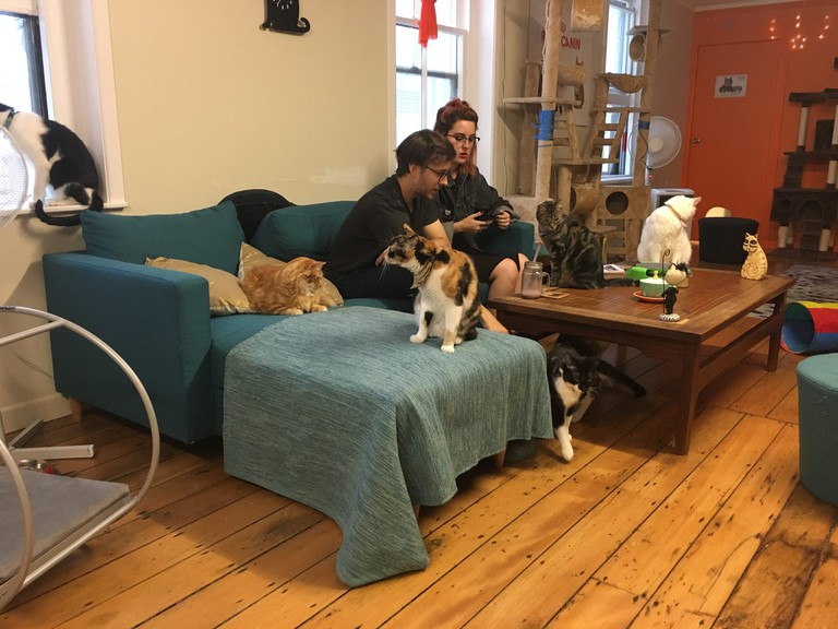 Cat cafe in Auckland