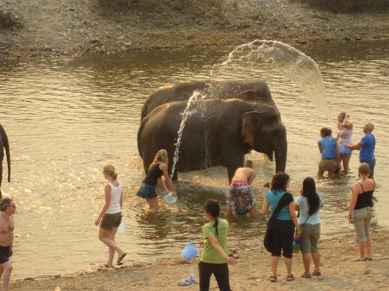 Bathing an elephant