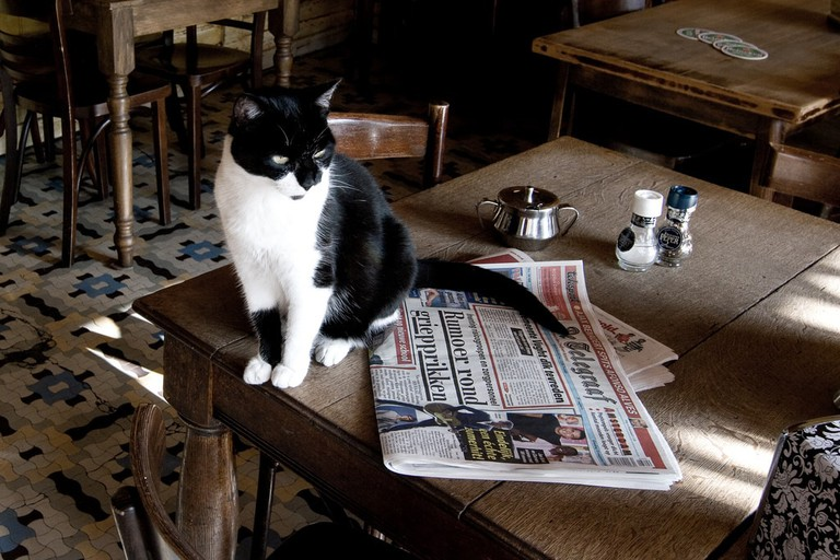 Sitting with a cat in a pub is definitely gezellig