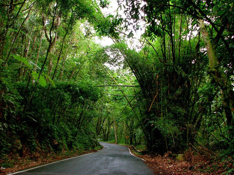 El Yunque National Forest I
