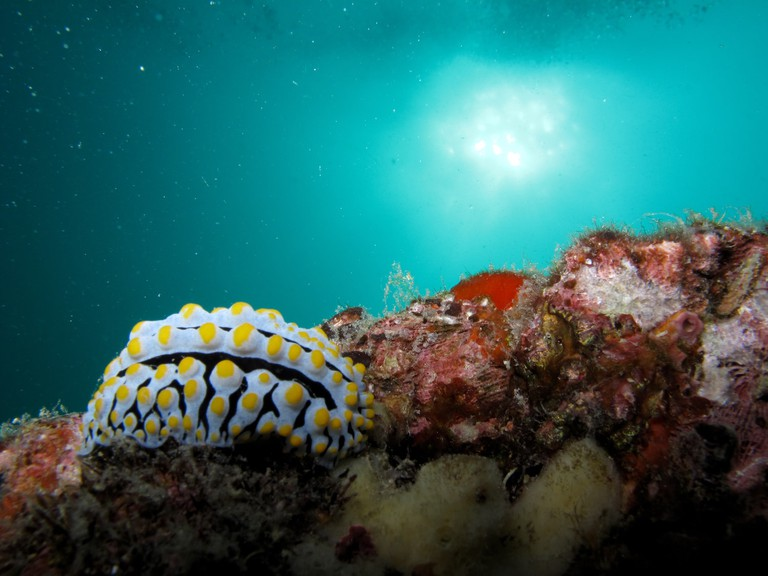 A stunning Nudibranch