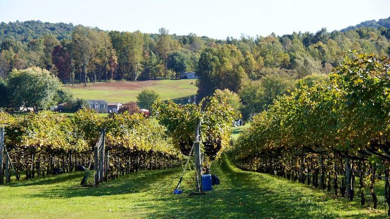 Barboursville Vineyards |© Ted Eytan / Flickr