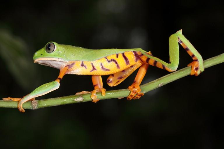 Yasuni National Park, Ecuador | © Santiago Ron / Flickr