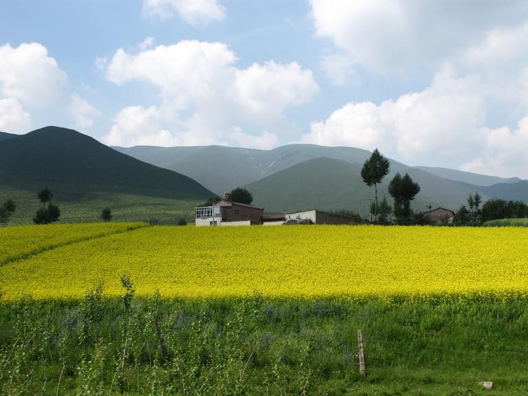 Qinghai Grasslands