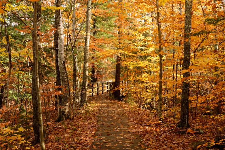 Autumn woods, New Hampshire