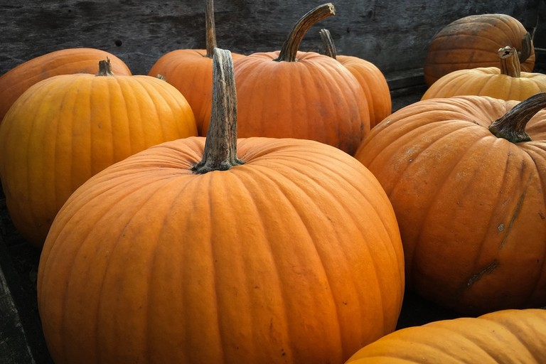 Americans love pumpkins