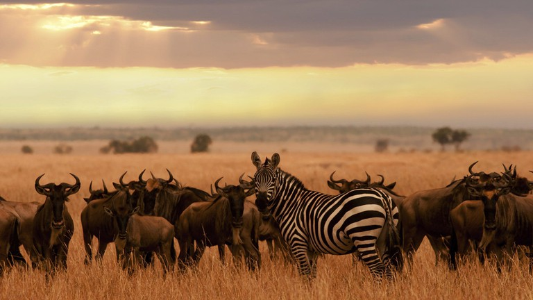 The popularity of going on African safari has boomed among Asian travellers in recent years