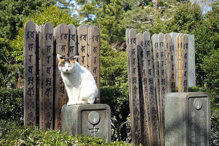 Cemetery in Bunko, Tokyo
