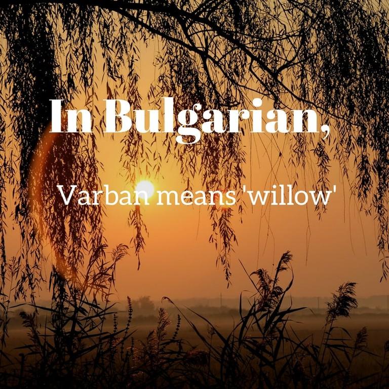 Varban