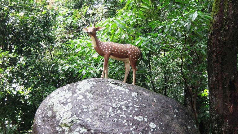 Deer Rehabilitation Center
