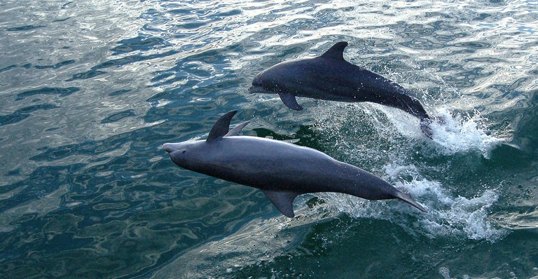 Keep your eyes open for dolphin