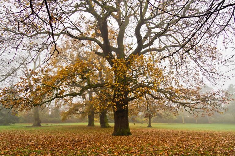 Autumn tree in park in London.