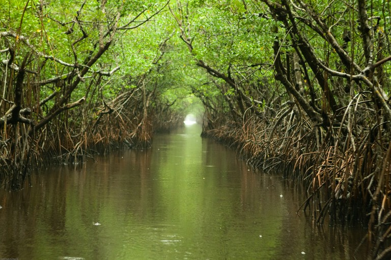 Everglades waterway on a rainy afternoon