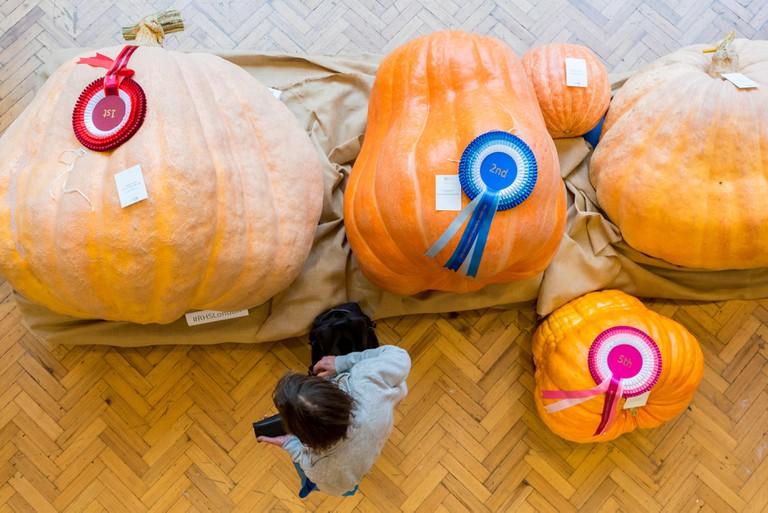 The RHS London Harvest Festival, Heaviest Pumpkin Competition.