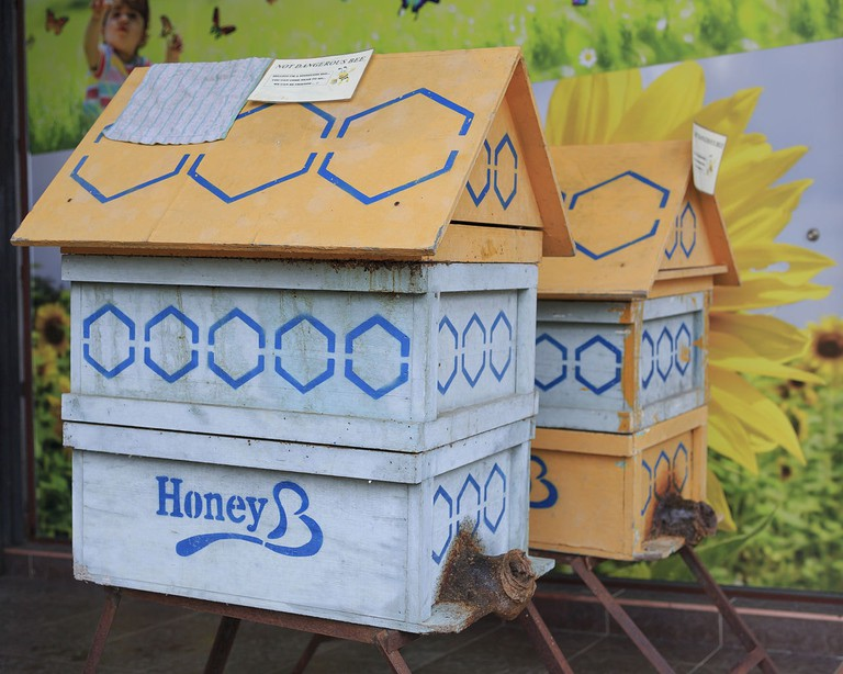 Bee Houses at Happy Bee Farm