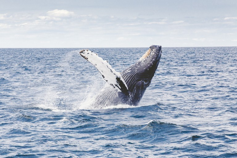 Whale watching I