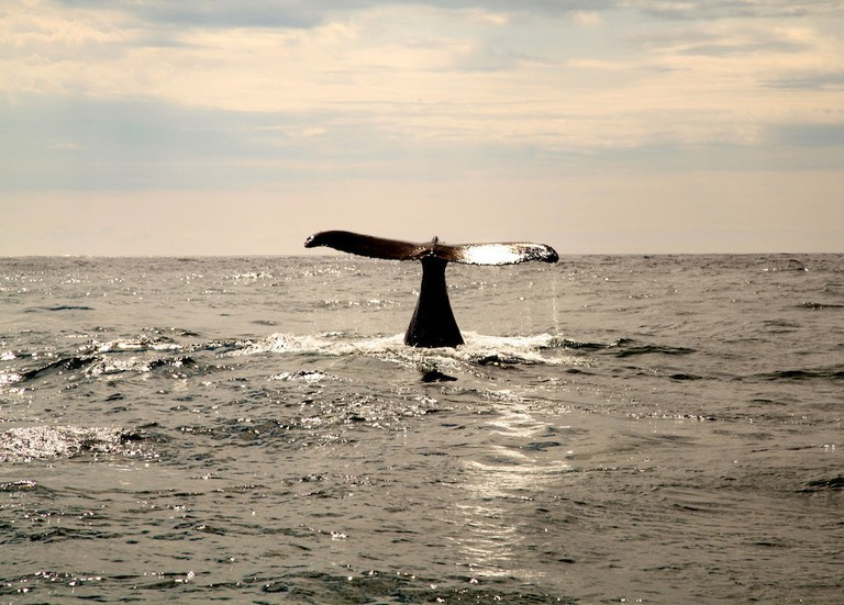 A humpback whale sighting