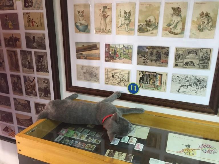 Cats Museum Kotor | © Sarah Pavlovic/Courtesy of Montenegro Pulse