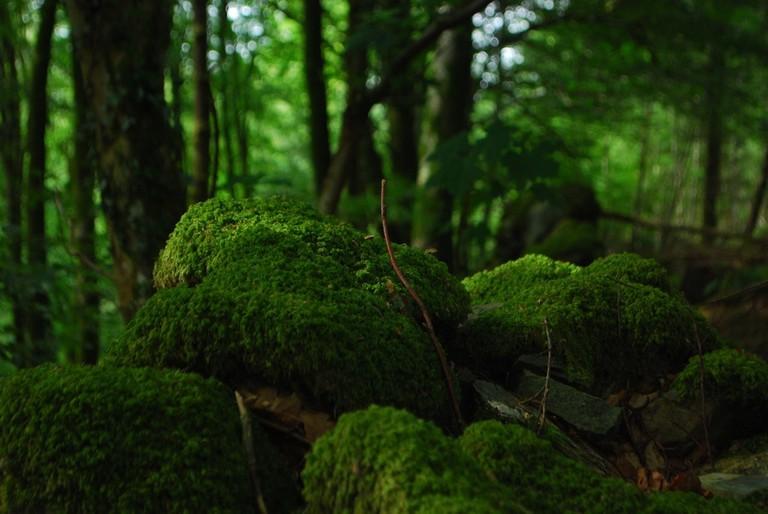 Jungle life I