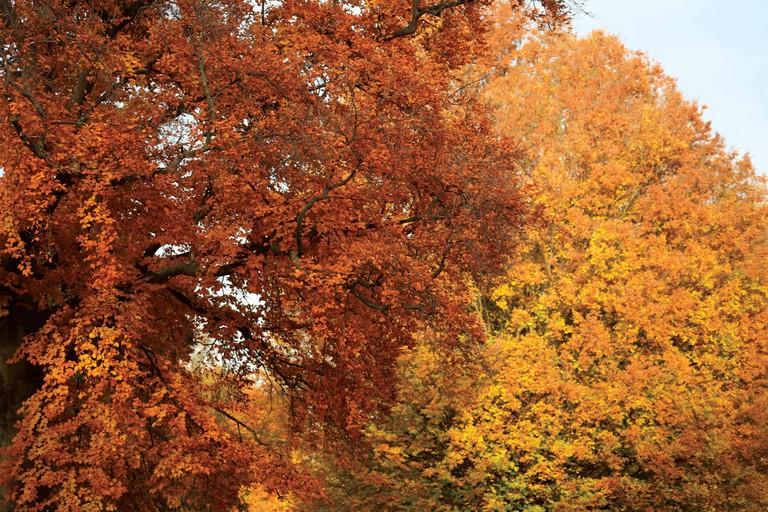 Beautiful Trees Hyde Park, London, UK