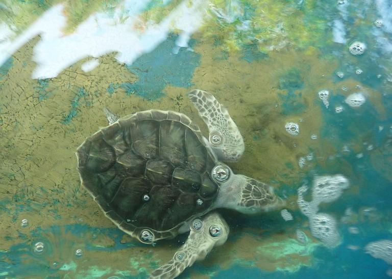 Sea turtles of Mazunte