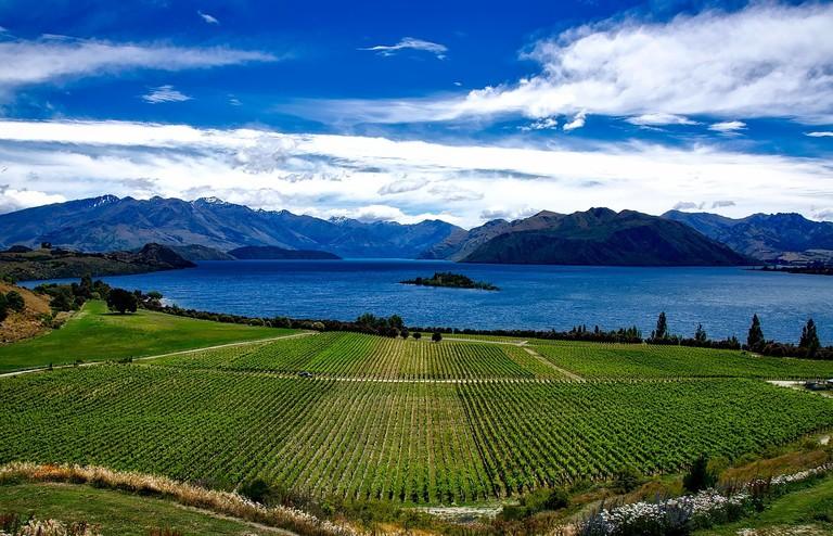 Rippon Vineyard, Lake Wanaka