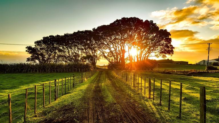Rural New Zealand Landscape