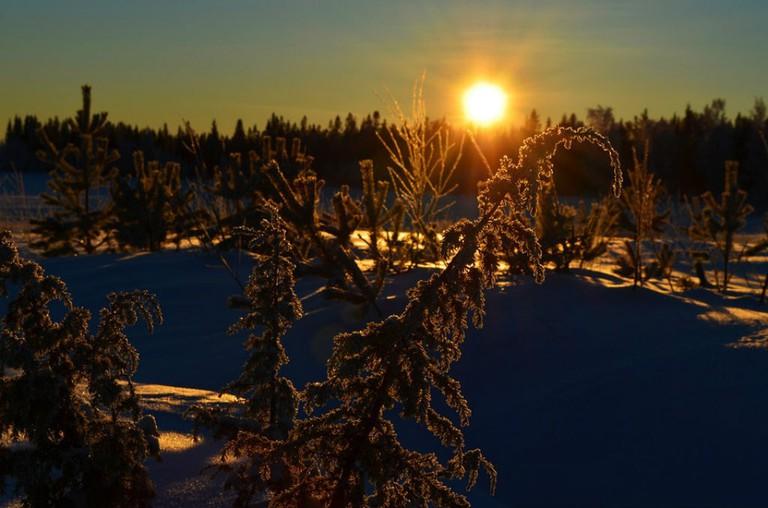 Northern winter sun