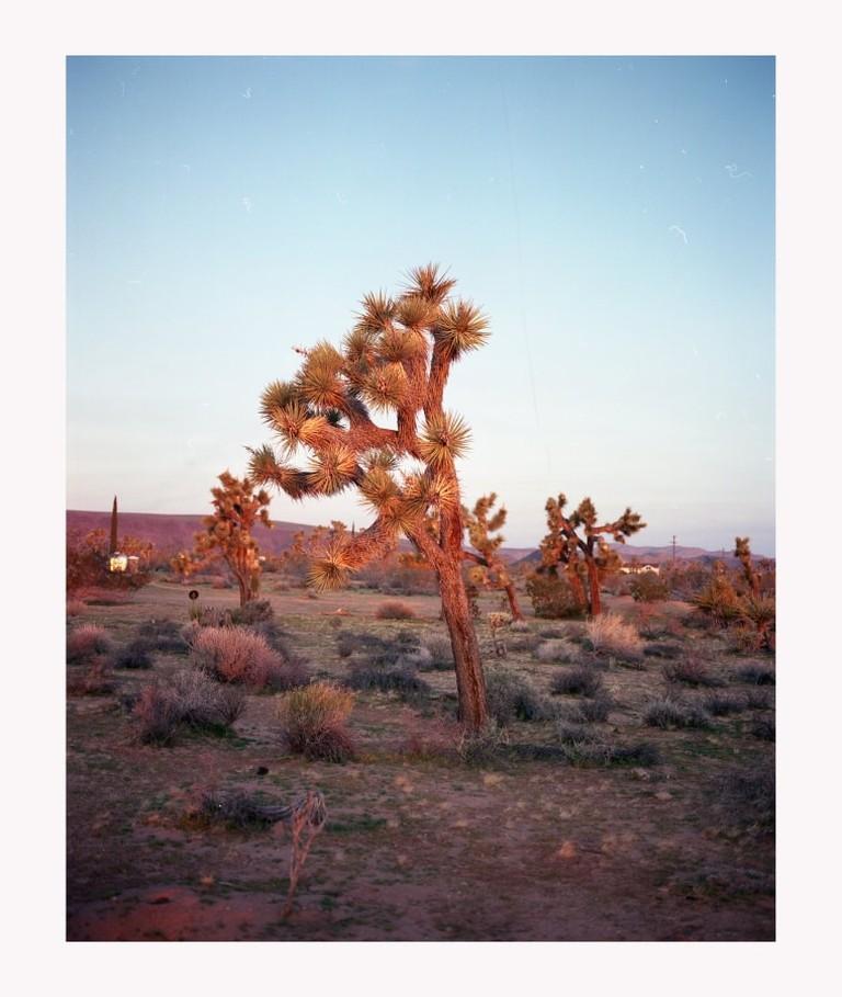 Joshua Tree 120mm