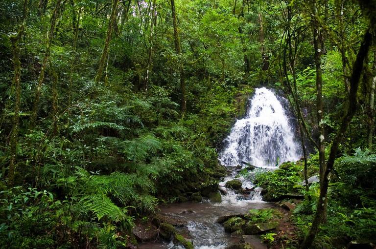 Jungle madness in Misiones