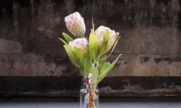 Proteas in a vase