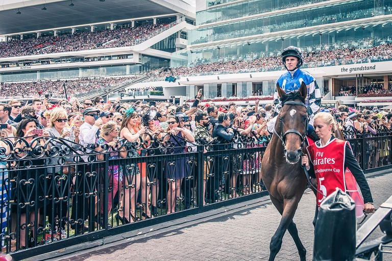 Protectionist before the 2014 Melbourne Cup