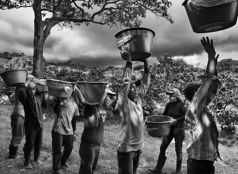 Coffee pickers. Finca La Hilda on the slopes of Poás Volcano, San José region, Costa Rica (2013)