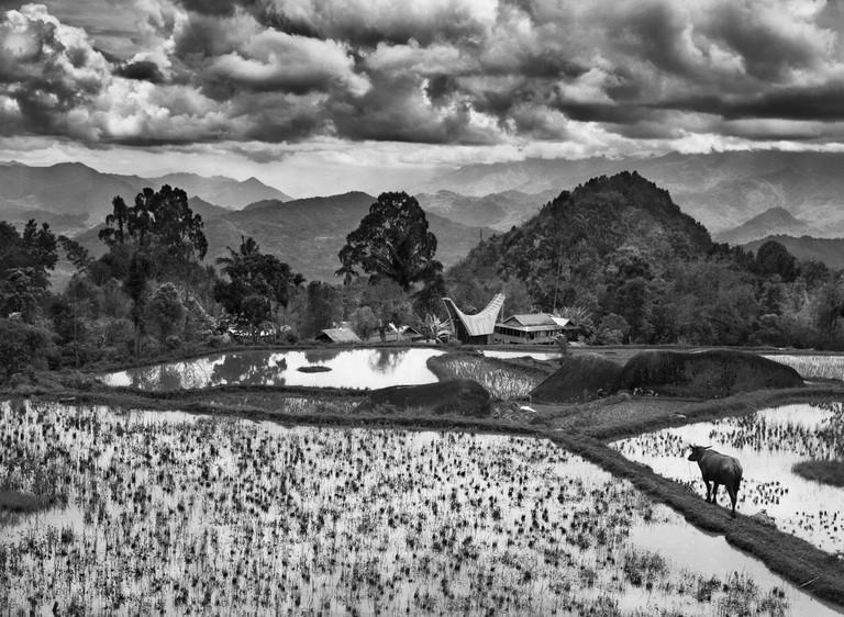 Coffee and rice village of Bokin. Coffee area around Rantepao, Turaja mountain area, Sulawesi Island, Indonesia (2014)