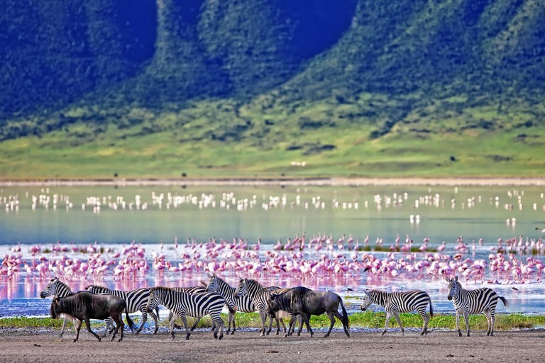 Wildlife in the Ngorongoro Crater | © Travel Stock/Shutterstock