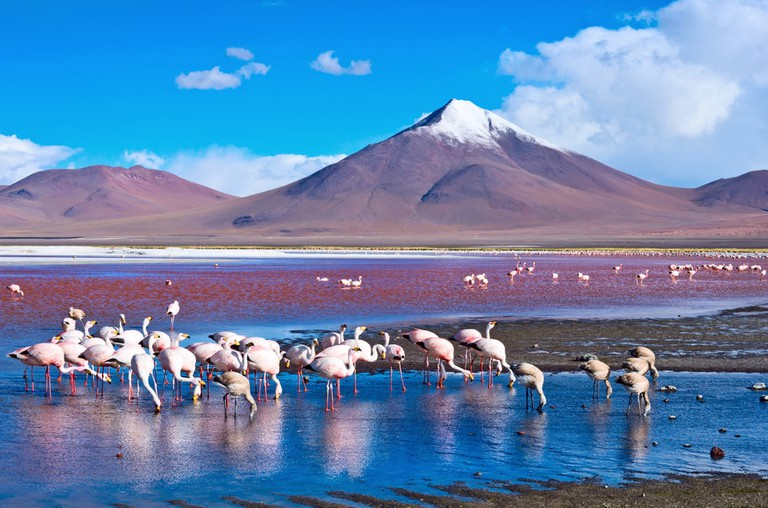 Flamingos in Laguna Colorada
