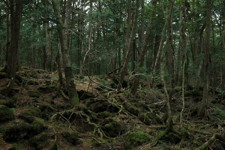 Aokigahara Forest | © mokokomo / Shutterstock