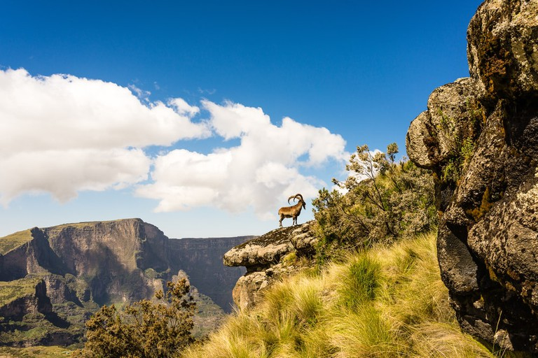 Ibex in The Simien Mountains of Ethiopia | © Michael De Plaen/Shutterstock