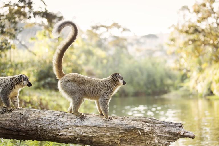 Lemur in their natural habitat, Madagascar | © danm12/Shutterstock